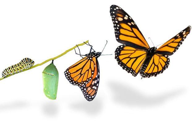 محیط در حال تغییر است آیا شما در حال تحول هستید؟ تفاوت تغییر و تحول چیست؟ استفاده از اثر مرکب مثبت علی خادم الرضا | مدرس و مشاور کارآفرینی و توسعه کسب و کار
